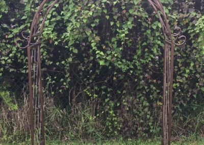 Iron Wedding Arch Rental